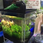 Aquaponics Nano Fish Plants Tank