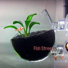 Plant Glass Polka for Freshwater Tank
