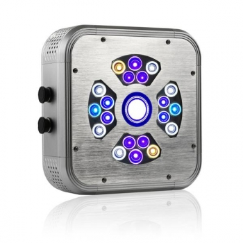 Coral Box Bee LED Lighting