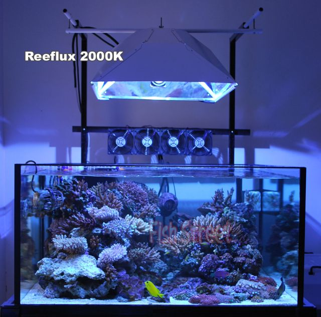 250W Purple Blue SE Metal Halide Bulb Reef Lamp