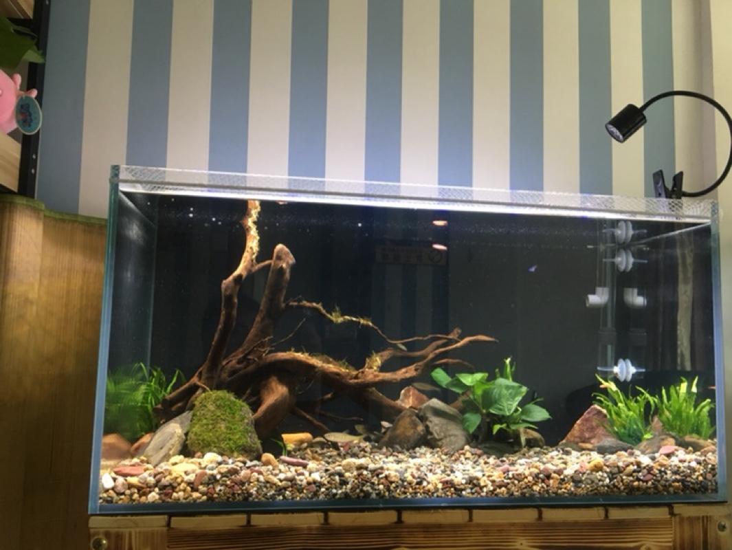 Diy Aquarium Heater Guard Buy Aquarium Cover In Aquariums Ebay